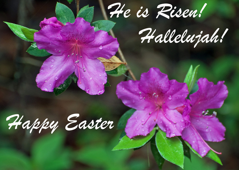 Posted 4.8.2012 Happy Easter  A repost that says it all.  Posted 4.24.2011 Happy Easter